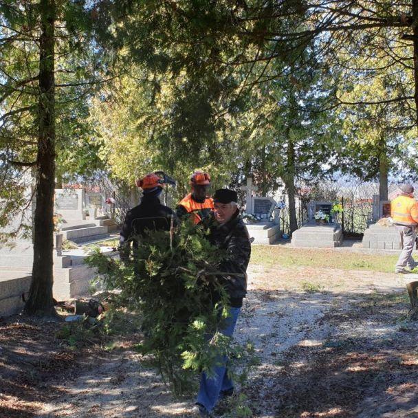 Výrub tují na cintoríne