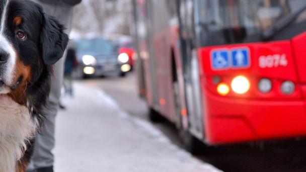 Zmena tarify MHD v Prešove
