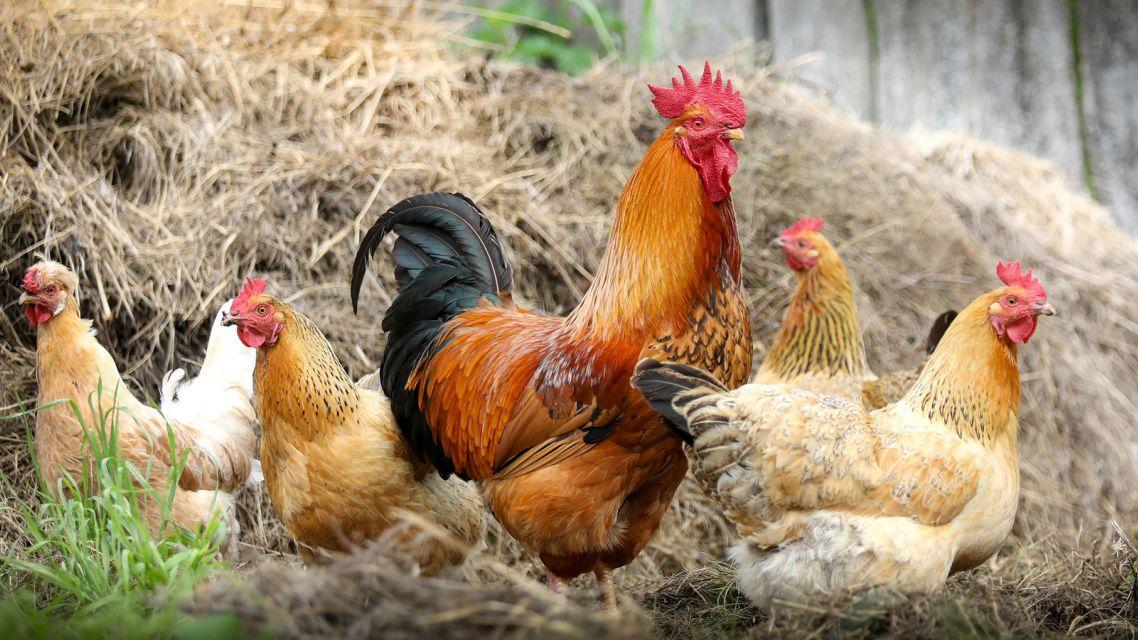 Výzva na podporu mladých poľnohospodárov