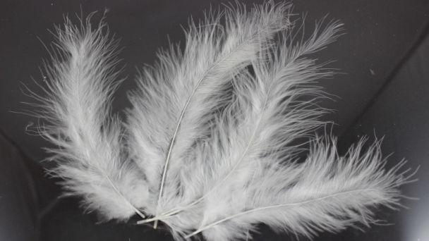 Čistenie peria